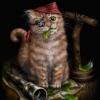 Pirate Kitten